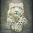 ♡ Snow Leopard ♡ by polly470