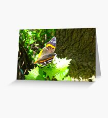 Red Admiral on shore leave Greeting Card