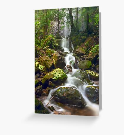 Mist in the Jungle Greeting Card