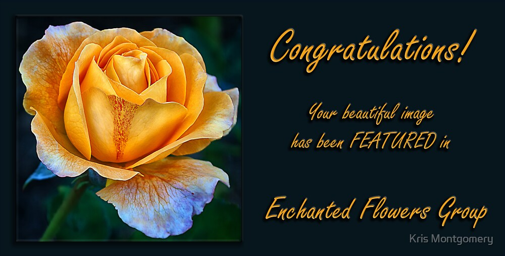 Yellow Rose ~ Banner Entry by Kris Montgomery