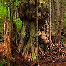 The Gnarly Giant by Thomas Dawson