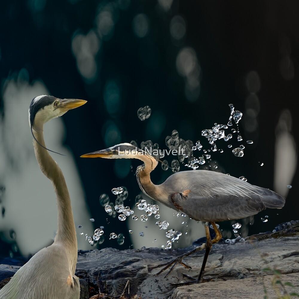 Couple Birds  by LudaNayvelt