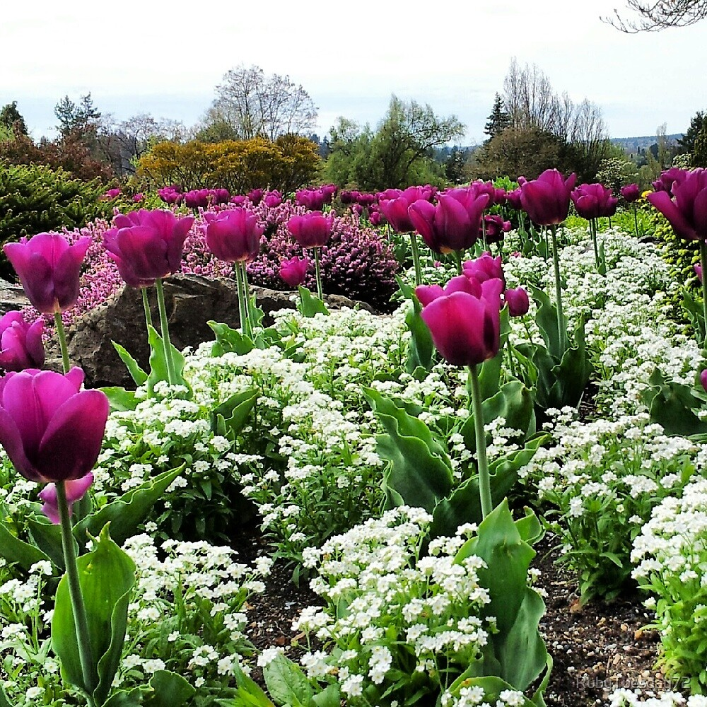 Purple Tulips by RubyTuesday72