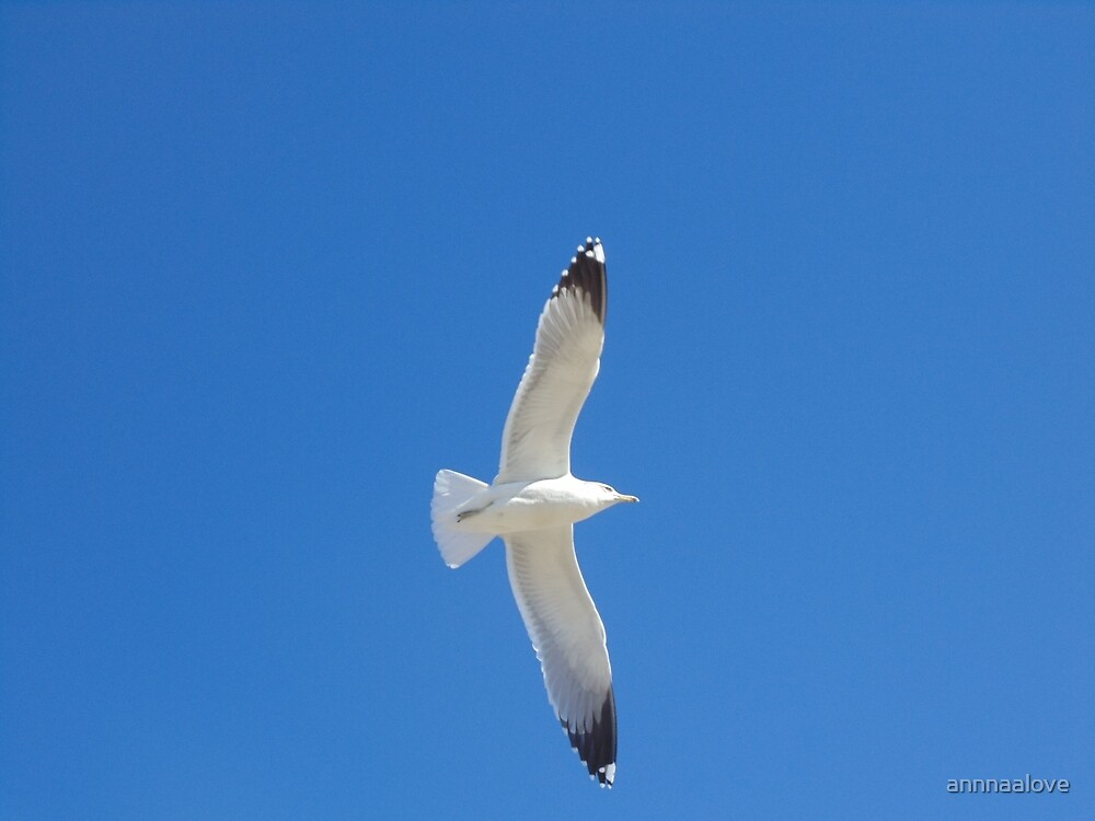 Blue Sky and Bird by annnaalove