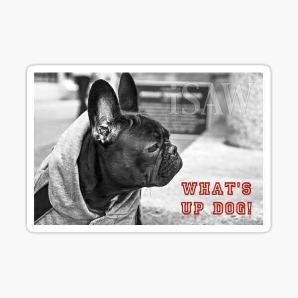 What's Up Dog! Sticker