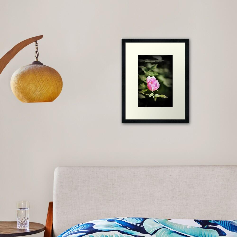 Old fashioned pink rose, near Trojan pond, Oregon 2 Framed Art Print