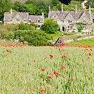 Cotswold Poppy Field by Stephen Knowles