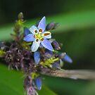 Purple Flower by AHakir
