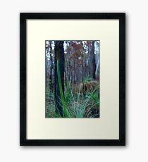Grass Tree (Xanthorrhoea) Framed Print