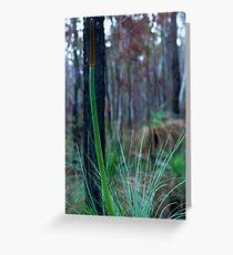 Grass Tree (Xanthorrhoea) Greeting Card