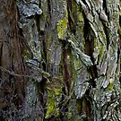 Tree Texture #1 by Ray Fowler