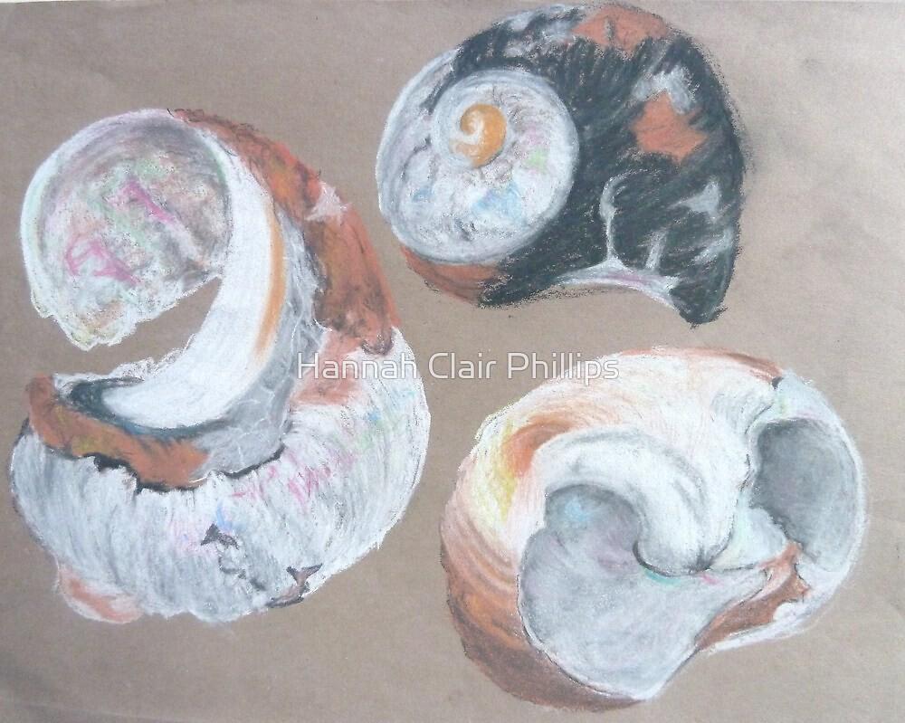 Shell studies by Hannah STICKNEY