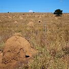 Termite-ridden lands by Karen01
