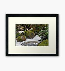 Rainforest gallery Warburton Framed Print