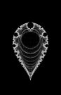 Inverted Mandelbrot I by Rupert Russell