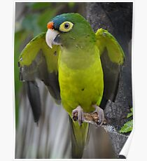 I'm An Ecologist - I'm Totally Green... - Soy Ecólogo - Soy Totalmente Verde Poster