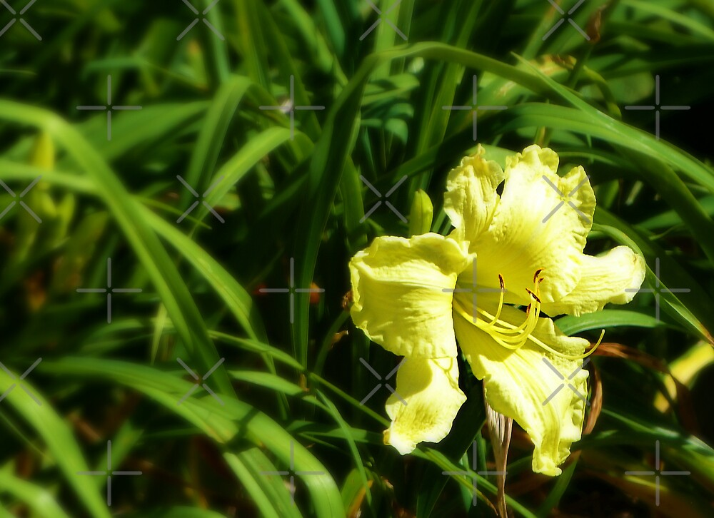 Yellow amidst the green by Scott Mitchell