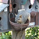 Cute Photograph of a Squirrel Eating Out of Basket by Patricia Barmatz