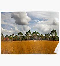 Sedgegrass & Pine. Three Lakes W.M.A. Poster
