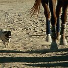 Beautiful Horse & Pug Photograph by Patricia Barmatz