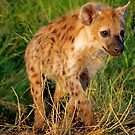 Young and curious by Explorations Africa Dan MacKenzie