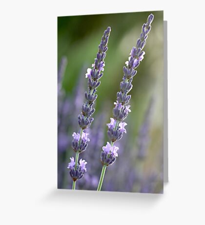 provence couple Greeting Card