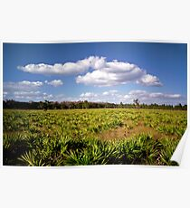 Palmetto & Sky. Three Lakes W.M.A. Poster