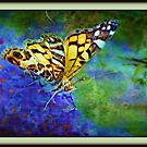 The Butterfly King by Scott Mitchell