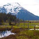 Alaskan wetlands,  From the train to Denali, 2012. by johnrf