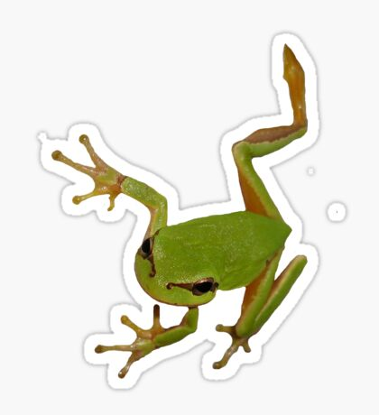 European Green Tree Frog Isolated Sticker