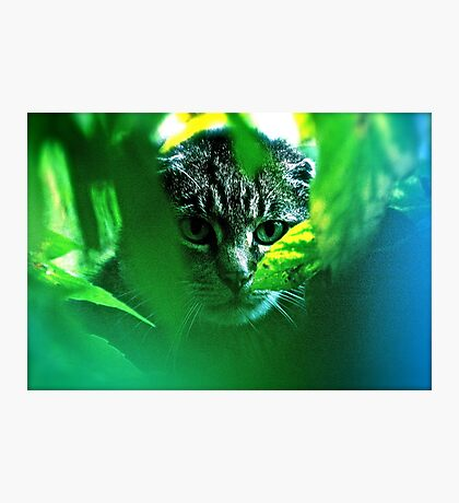 My   F   A   V   O   R   I   T   S  !   Warrior Cats Theme Songs  . by Brown Sugar . Tribute to Wild World - Cat Stevens . VIEWS 3364. Featured . MYSTERIES OF THE PAST AND PRESENT . Has been sold. Photographic Print