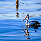 Yes I can Pelican by jesskato