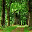 Walking under old beech-trees in summer by jchanders
