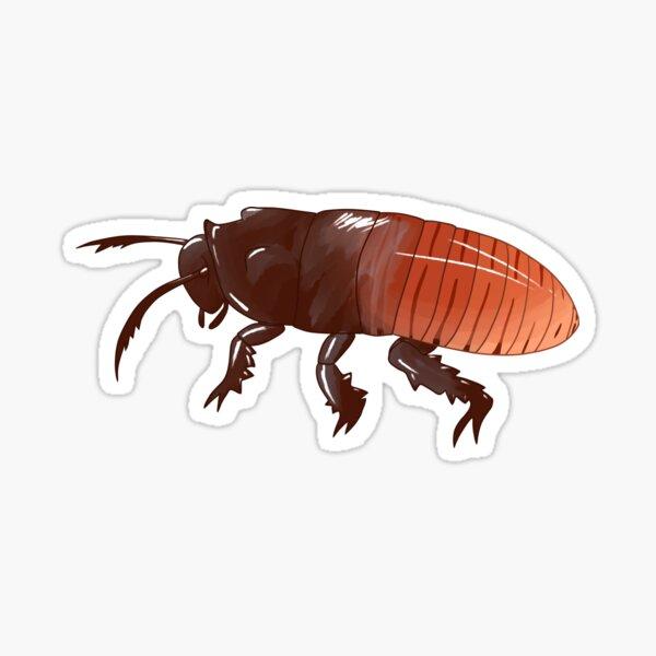 Madagascar Hissing Cockroach Sticker