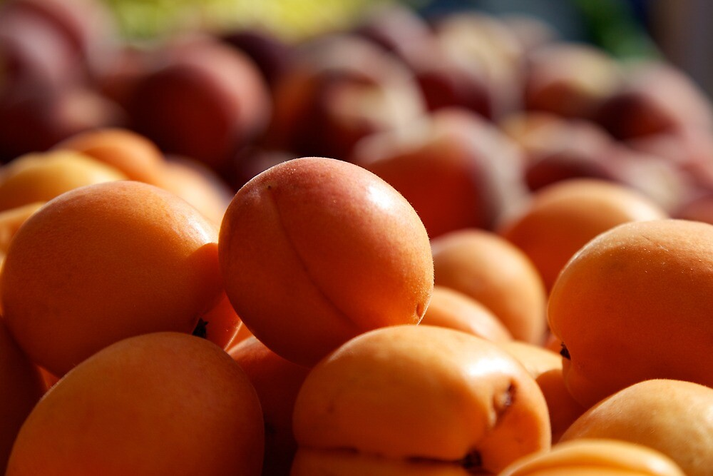 Apricots by thvisions
