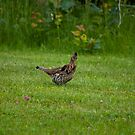 Why Did the Grouse Cross the Road? by Richard Lee
