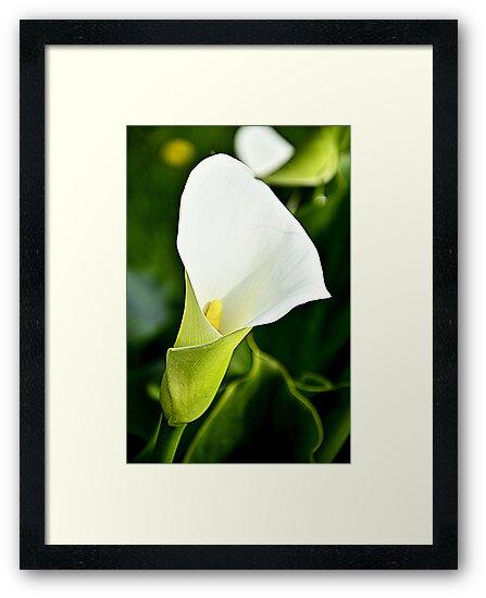 Lily by Martina Fagan