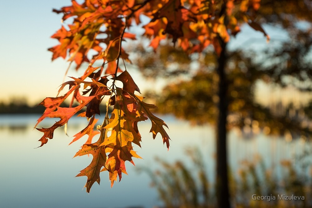 Sunny Autumn Colors on the Shore - the Changing Oak Tree by Georgia Mizuleva