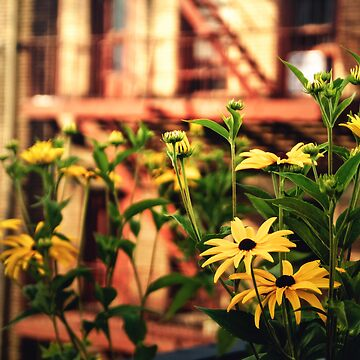 High Line Flowers - New York City de vgucwaphoto
