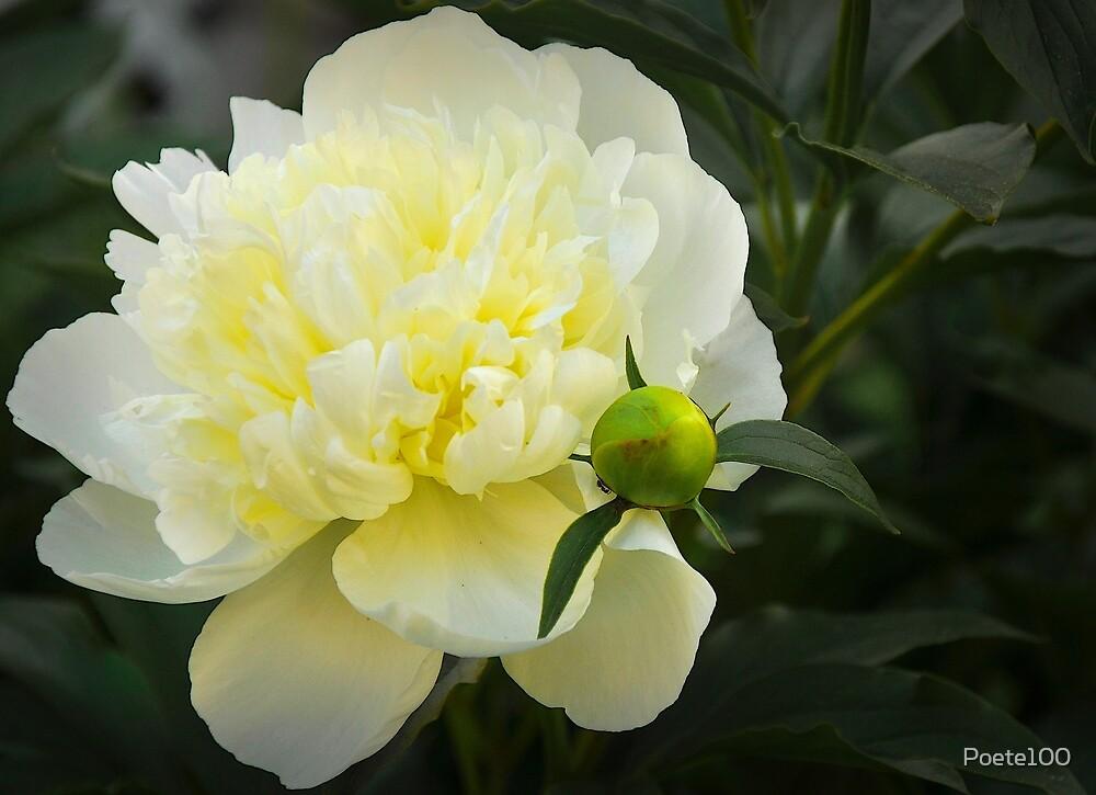 Beauty is a light in the heart by Poete100