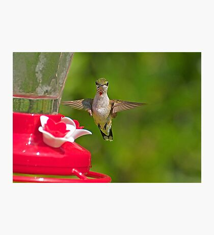 Hovering Hummer Photographic Print