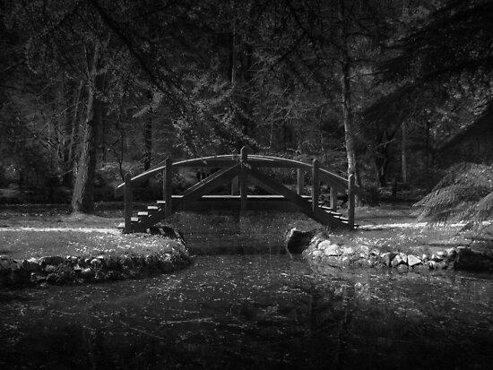 Dark bridge by Louise Delahunty