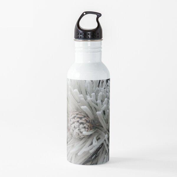 Frosted Pine Cones Winter Wonderland Water Bottle
