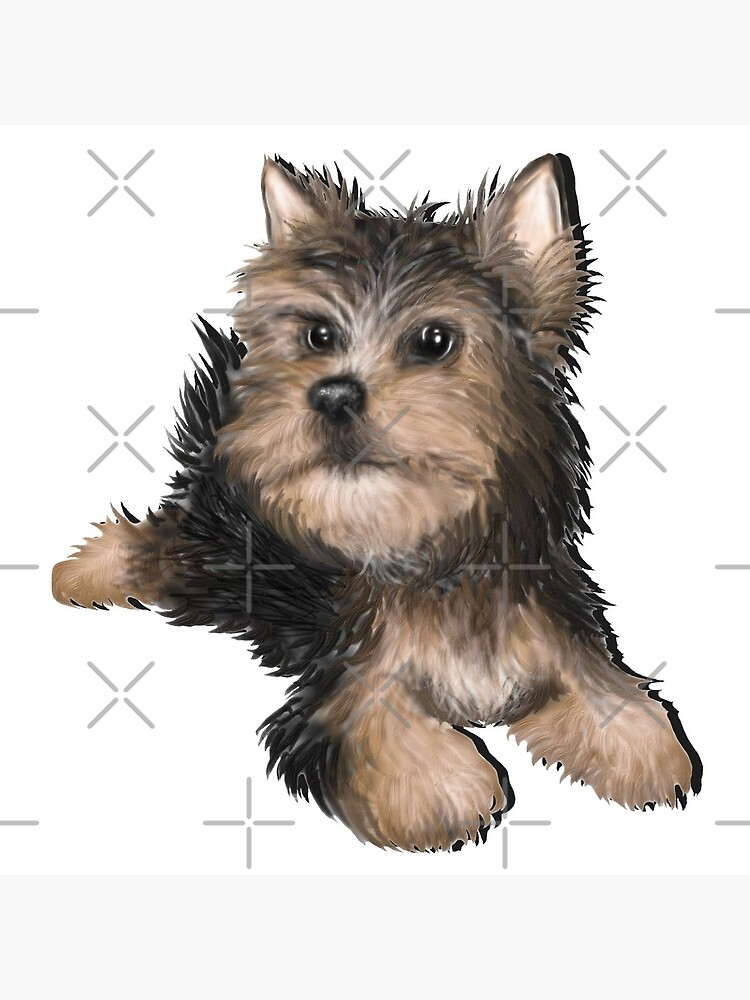 Alert Young Yorkshire Terrier Puppy by snohock