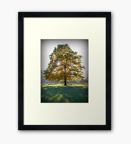Tree Aglow Framed Print
