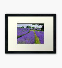 Mayfield Lavender Fields 1 Framed Print