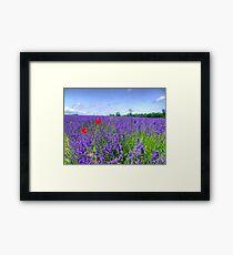 Mayfield Lavender Fields 3 Framed Print