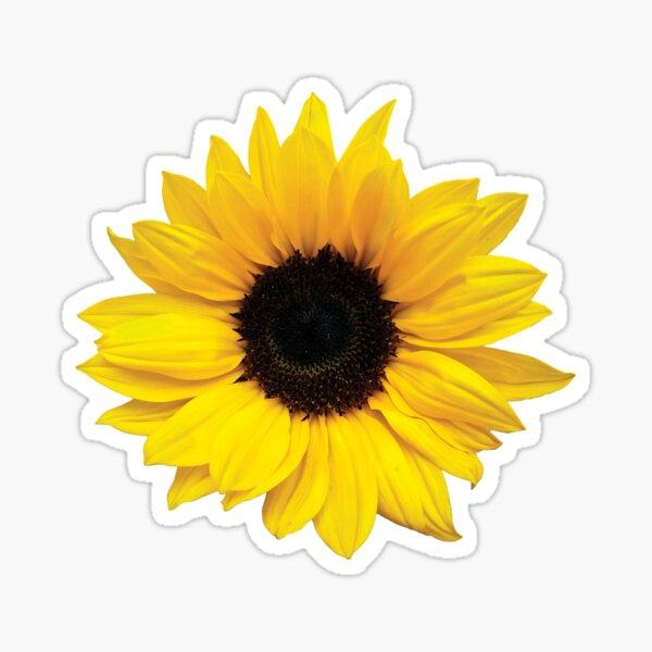 sunflower flower floral yellow brown Sticker