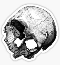 Human Skull Vintage Illustration Sticker