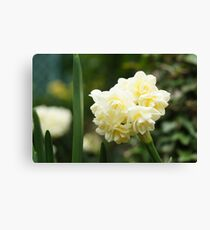 Cream Flowers Canvas Print
